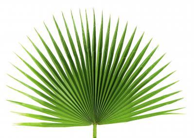 PalmGardensInc-Fan